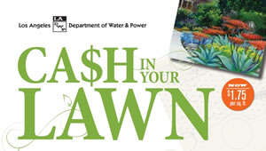 Cash in your lawn
